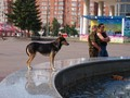 Lajka na fontáně