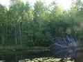 Rybník u lágru Barabanicha